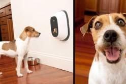 PetChatz: Видеофон для кошек и собак (фото+видео)